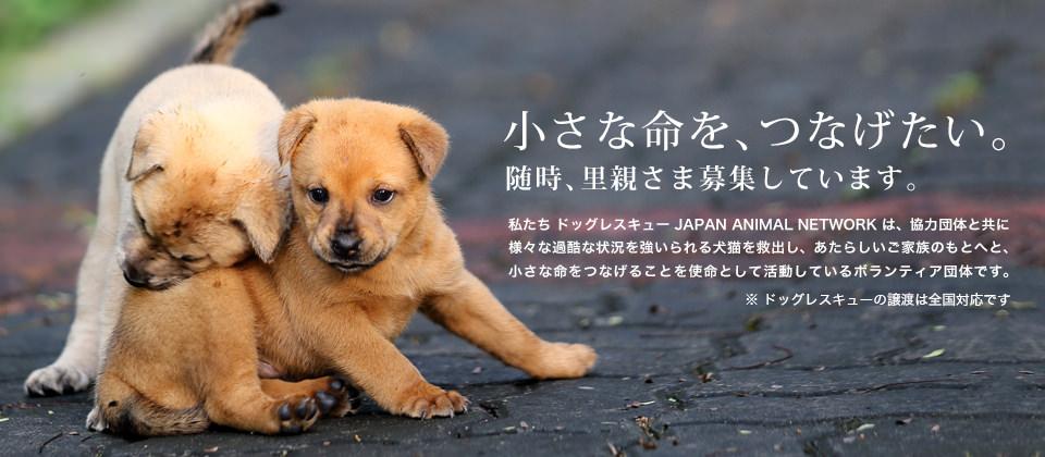 小さな命を、つなげたい。随時、里親さま募集しています。私たち ドッグレスキュー JAPAN ANIMAL NETWORK は、協力団体と共に様々な過酷な状況を強いられる犬猫を救出し、あたらしいご家族のもとへと、小さな命をつなげることを使命として活動しているボランティア団体です。※ ドッグレスキューの譲渡は全国対応です